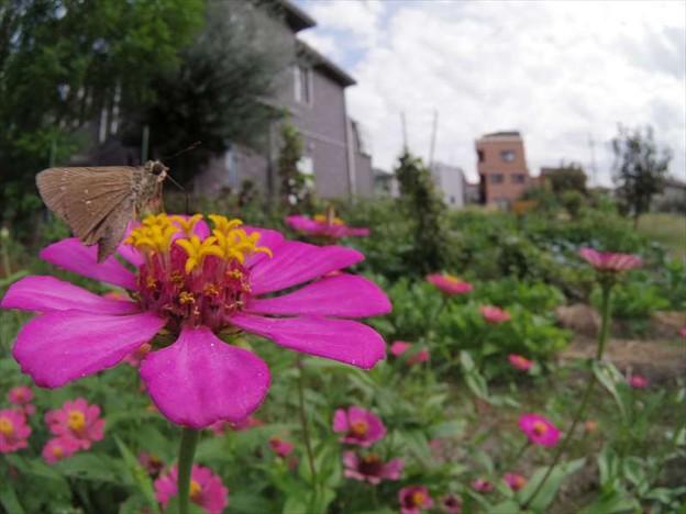 この花、うみゃーでかんわ~。