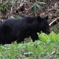 Photos: ♪ 熊さんに出会った~1