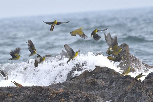 アオバト-夏恒例の海で-2