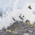 アオバト-夏恒例の海で-4