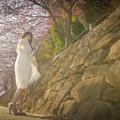 写真: 桜咲く頃に…