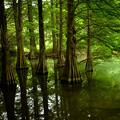 写真: 九大の森