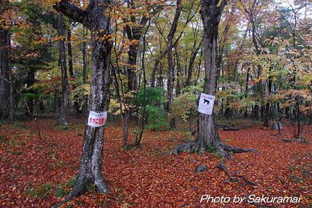 紅葉の散策路の注意看板