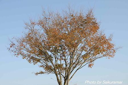 青空と枯れ紅葉