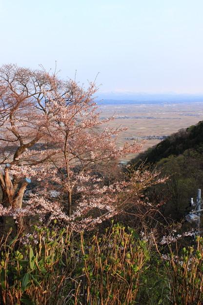 2016年4月 弥彦山にて