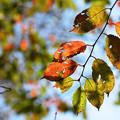 ふと気付けば秋の装い