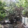 2.公園内の倒木(2)IMG_4850