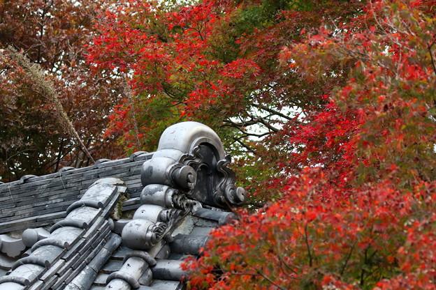 Photos: 松尾寺紅葉(2)FK3A9940