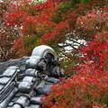 松尾寺紅葉(2)FK3A9940