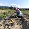 Photos: ジャガイモ掘り(3)IMG_6933