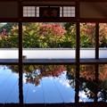 写真: 床もみじ・03