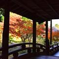Photos: 日本庭園の紅葉