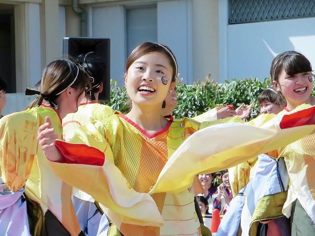和歌山大学よさこいサークル「和歌乱」さん