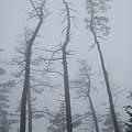 写真: 霧の箱根