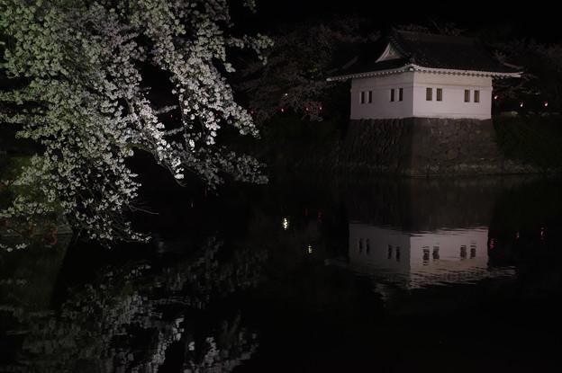 小田原城址の桜