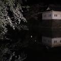 Photos: 小田原城址の桜