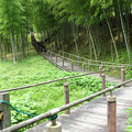 Photos: 竹林小道