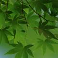 新緑シーズン