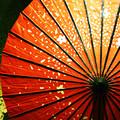 Photos: 雨恋し