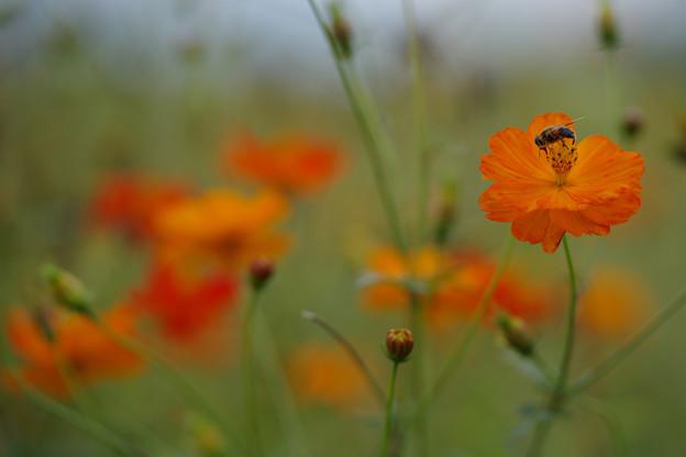Photos: キバナにハチ