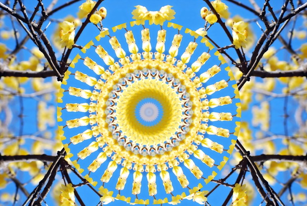 蝋梅の花-01