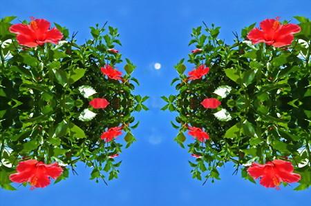 ハイビスカス-03b昼の月