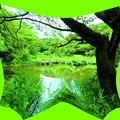 写真: 国立自然教育園_水生植物園-01b