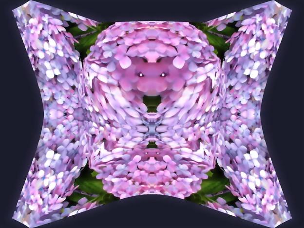 紫陽花-02d