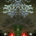 写真: 夜桜-03c