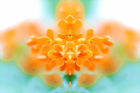 金木犀-07a