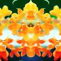 金木犀b-02(1-2-2)