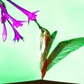 鳥媒花-01b