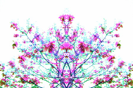 桐の花-01d