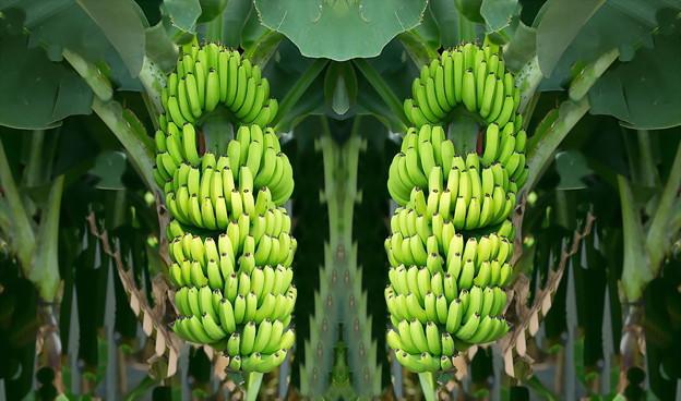 バナナ-01