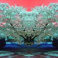 しだれ桜-02e
