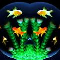 写真: 金魚鉢-03