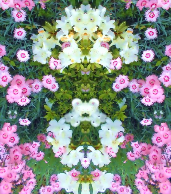 Petite Fleur-12c