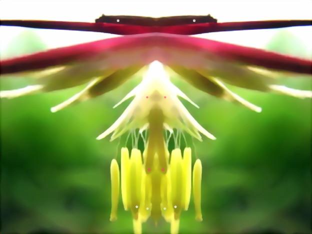 竹の花-01d