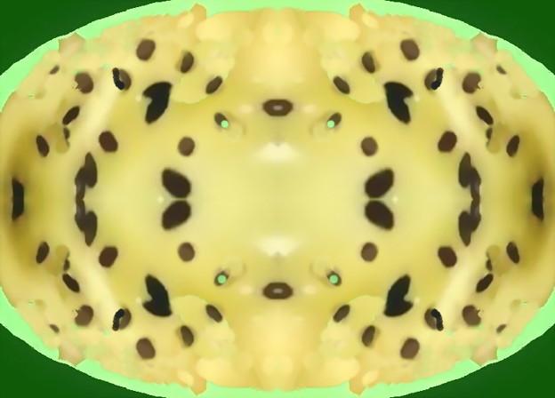 キウイフルーツ_チーズ焼き-01c