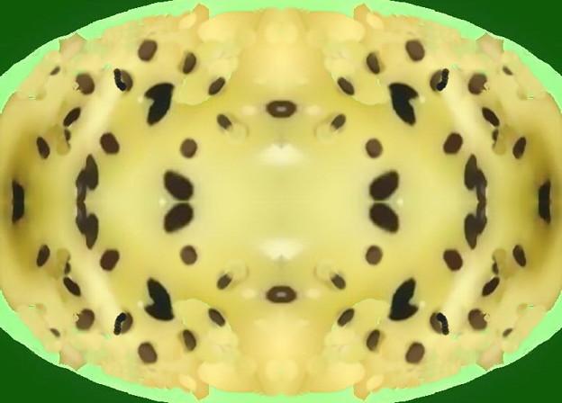 キウイフルーツ_チーズ焼き-01a
