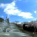 Photos: 桜_2019-01