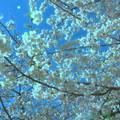 Photos: 花明り-02b