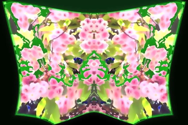 桜-06b(1-2)