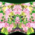 Photos: 桜-06b(1-2)
