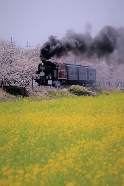 写真: 真岡鉄道 SL