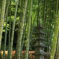 写真: Japan