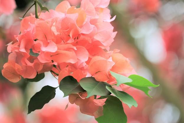 写真: 魂の花