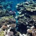 写真: サンゴ密集地W