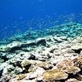 写真: 鳩間島の海 1