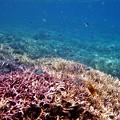 写真: 鳩間島の海 2